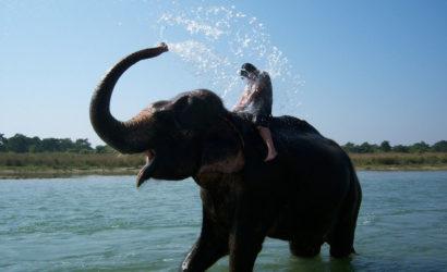 Traverse Chitwan Tour