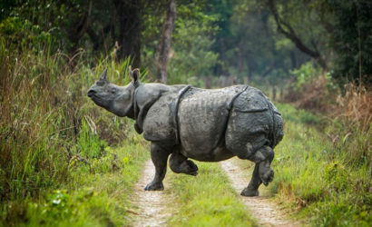 Chitwan Luxury Tour