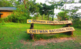 chitwan-national-park-jungle-safari-packages